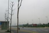 Hà Nội: Cây xanh mới trồng đã chết hàng loạt