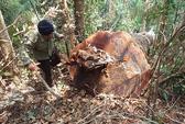 Sẽ khởi tố vụ án phá rừng ở Chư Pah