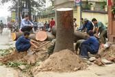 ĐH Lâm Nghiệp cấm cán bộ phát ngôn vụ 6.700 cây xanh