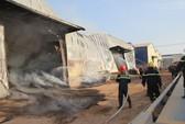 Bình Dương: Cháy cơ sở sản xuất viên gỗ nén, nhà xưởng bị thiêu rụi
