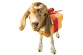 Năm Ất Mùi kỵ quà tặng gì?