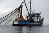 Mỹ quyết trấn áp nạn đánh bắt cá trái phép