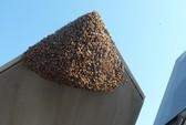 """Mỹ: Siêu chiến đấu cơ F-22 Raptor bị 20.000 con ong """"dìm"""" xuống đất"""