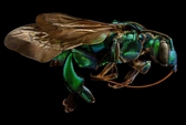 Để có ảnh côn trùng như thế này, không hề đơn giản