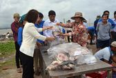 Quảng Ngãi: UBND huyện thu mua cá bớp giúp nông dân
