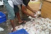 Phát hiện cả tấn cá thối tại quán cơm công nhân