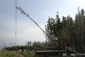 Vụ cẩu cây dầu gây mất điện: Phải điều tra bổ sung!