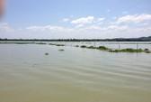 Kiểm lâm bị đánh dập lá lách trên hồ Trị An