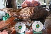 Cá hô Biển Hồ 130 kg về nhà hàng ở Sài Gòn