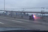Màn rượt đuổi gay cấn giữa cảnh sát Mỹ và... chó