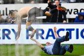 Xem màn ăn mừng điên cuồng của tiền đạo và fan Newcastle