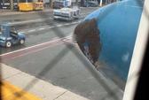 Ong vỡ tổ làm trễ chuyến bay Vietnam Airlines