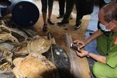 Khởi tố đối tượng buôn bán rùa biển