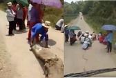 """Phụ nữ, trẻ em chặn đường """"xin đểu"""" tài xế xe chở heo ở biên giới"""