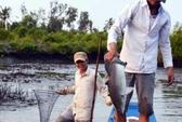 Độc chiêu mỏi tay bắt cá của dân miền Tây