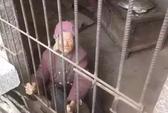 """Con nhốt mẹ già 92 tuổi trong """"chuồng heo"""" gây phẫn nộ"""
