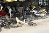 Cúm H7N9 áp sát Việt Nam