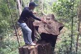 """Vụ rừng bị xẻ thịt, kiểm lâm không biết: """"Cùng lắm là…rút kinh nghiệm"""""""