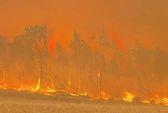 Úc nóng hừng hực, cháy rừng mù mịt