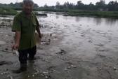 Đà Nẵng: Cá chết trắng đồng là do nhà máy mạ kẽm xả thải