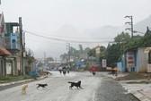 Khổ vì chó thả rông trong khu dân cư