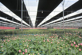 Tìm đường cho nông nghiệp công nghệ cao