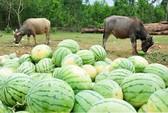 Lo cho nông nghiệp