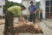 100 khúc gỗ Hương Giáng của dân mê phong thủy bị bắt giữ