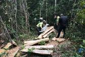 Hàng chục đối tượng bịt mặt, cướp... 2 khúc gỗ