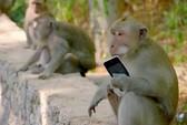 """Bầy khỉ """"xã hội đen"""" trên đảo Bali"""