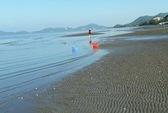 Vụ hải sản chết bất thường: Có hiện tượng tảo nở hoa