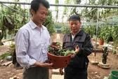 Sự thật giò lan đột biến giá gần 100 triệu ở Hà Nội