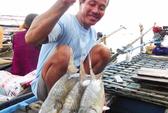Săn cá cóc trên sóng nước miền Tây