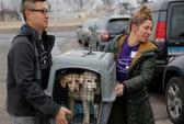 Chó ở Hàn Quốc... tái định cư tại Mỹ