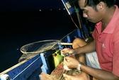 Nín thở theo bạn thuyền săn mực trên biển miền Trung