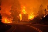 Cháy rừng bí ẩn, hàng chục người chết trong ô tô
