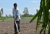 Nông dân Tiền Giang, Long An đổ xô trồng thanh long