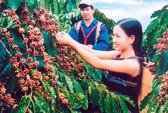Cà phê Việt Nam xuất khẩu số 1 thế giới