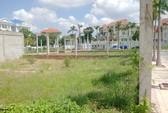"""Những """"cánh đồng hoang"""" ở quận 2, TPHCM"""