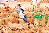 Giá gạo Việt Nam chờ tin từ Indonesia