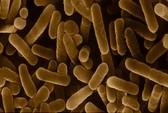 Giẻ rửa chén bẩn gấp 200.000 lần bồn cầu