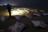 200 con cá đuối chết bí ẩn trên bờ biển Gaza