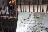 """Trung Quốc đóng cửa sở thú """"biến"""" chó thành sư tử"""