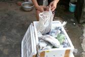 Mua bán hải sản từ gốc