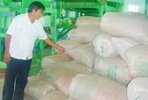 Hướng đến xuất khẩu gạo chất lượng cao