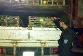 Lại bắt quả tang gần 1 tấn mèo nhập lậu từ Trung Quốc