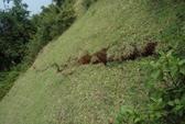 Xác định nguyên nhân gây vết nứt dài 250 m ở xã Đức Lạc