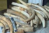 Nhân viên thi hành án trộm hơn 200 kg ngà voi tang vật