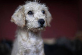 Đã có 5 người chết vì chó hoang tấn công ở Mexico