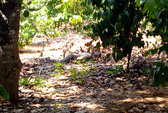 Phát hiện xác chết trong vườn cà phê